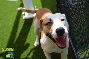 Miami-Dade Animal Services Pets of the Week