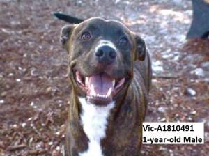 Last Chance Dogs at Broward Animal Care