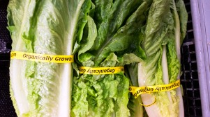 FDA Plans to Track 'High Risk' Foods to Prevent Outbreaks