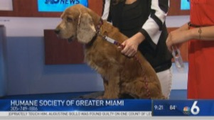 Clear the Shelters: Jessie