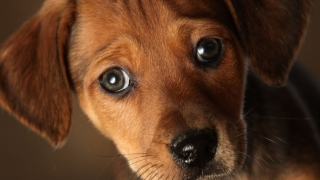 Family Dog Turns on Stove, Sets House on Fire