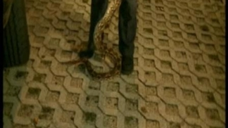 Snake Found in Miami-Dade