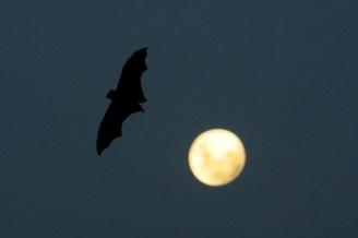 Rabies Alert After Bat Tests Positive in Boca Raton