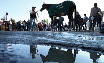 Derby Winner Nyquist Ready for Preakness