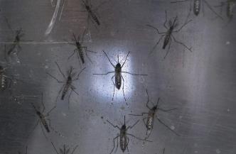 Zika Affected Woman's Brain and Memory, Doctors Say