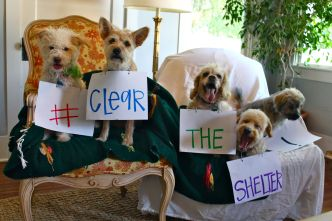 Clear The Shelters 2016:  ADOPTED!