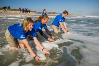 11 Sea Turtles Released Back Into Florida Waters