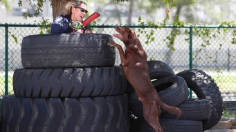 Good Dog! Miami-Dade K-9 Unit Ready for Busy Hurricane Season