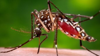 Pregnant NYC Woman Diagnosed With Zika Virus: Officials