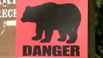 Bear Fatally Mauls Teen During Alaska Race