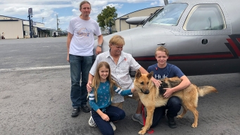 Colorado Dog Reunited With Florida Family After 2017 Theft
