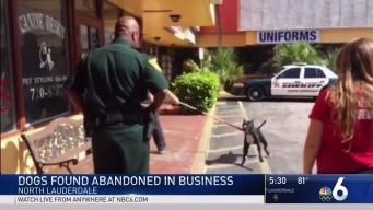 Dogs Found Abandoned in North Lauderdale Business