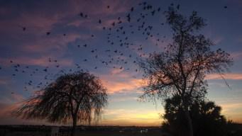 Bird Populations Are Under Threat, But Birdwatchers Can Help