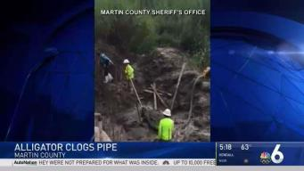 Florida Construction Crew Finds 5-Foot Gator in Pipe