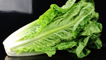 Lettuce-Linked E. Coli Outbreak Soars to 84 Cases in 19 States; 42 Hospitalized