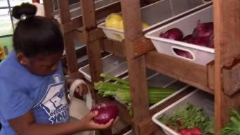 Health in The Hood Brings Veggies to Underserved Areas