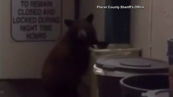 Bear Shows Up in Sheriff's Office