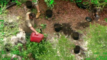 Florida Men Caught Burning Marijuana Plants, Arrested