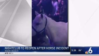 Miami Beach Nightclub to Reopen After Horse Incident