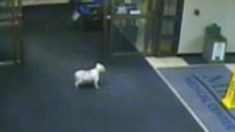 Dog Runs Away From Home, Tracks Down Owner With Cancer in Hospital