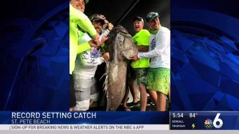 Record Setting Fish Caught in St. Petersburg