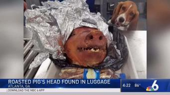 Roasted Pig's Head Found in Luggage at Atlanta Airport