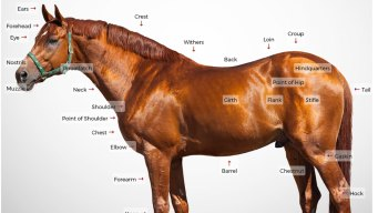 Kentucky Derby: What Makes a Race Horse?