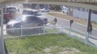 Terrifying Hit-and-Run Caught on Camera