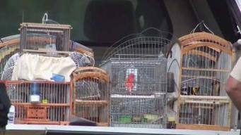 Six Charged Over Migratory Bird Trafficking