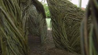 Sculptor Uses Tree Saplings to Rebuild Area Affected by Irma