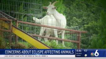Store Owner Concerned About 'Alien' Goats During Eclipse