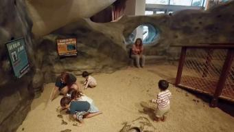 Summer Camps at Museum of Discovery and Science