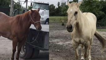 Two Horses Stolen From NW Miami Dade Ranch