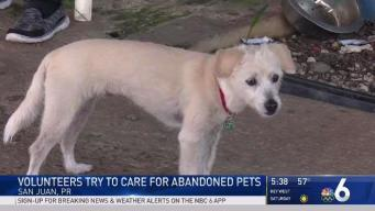 Volunteers Try to Care for Abandoned Pets in Puerto Rico