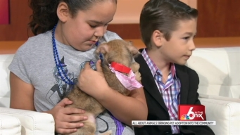 All About Animals: Adoptions in the Community