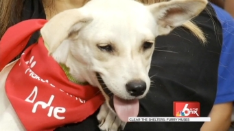Clear The Shelters: Furry Muses
