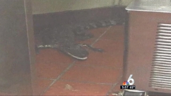 Florida Man Throws Alligator Through Drive-Thru Window