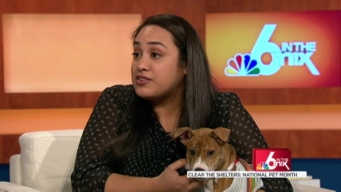 Clear the Shelter: National Pet Month