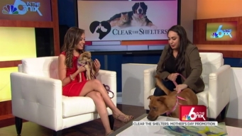 Clear the Shelters: Mother's Day Promotion