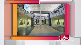 Clear the Shelters: New Shelter for MDAS