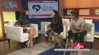 Clear the Shelters: Lost Pet Prevention Month