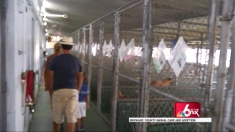 Clear the Shelters: Broward Animal Care