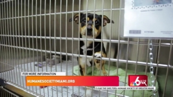 Clear the Shelters: Humane Society of Greater Miami
