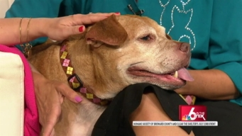 Clear the Shelters: Humane Society of Broward County