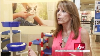 Clear the Shelters: Adoption Tips