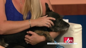 Clear the Shelters: Upper Keys