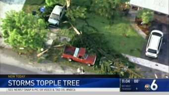 Lightning Strike Sends Massive Tree onto Cars Outside Fort Lauderdale Home