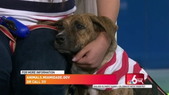 Clear the Shelters: Celebrate Olympics with your Pets