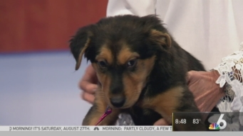 Pet of the Week: Lily