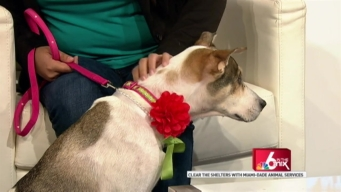 Clear the Shelters with Miami-Dade Animal Services